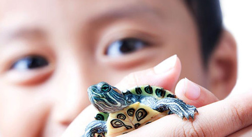 Understand zoonotic disease before getting a pet reptile or amphibian