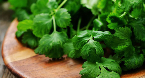 Cilantro? Why it's good for you and why some people absolutely (REALLY) hate it