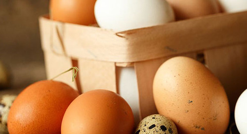 "Become an ""Eggs-pert"" on Carton Labels"