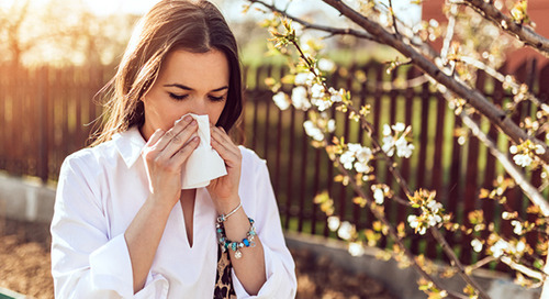 Why your seasonal allergies are getting worse