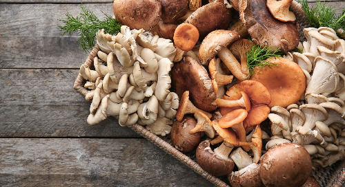 The miraculous world of mushrooms