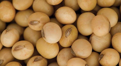 Choosing Genetics is the First Step to High Soybean Yields