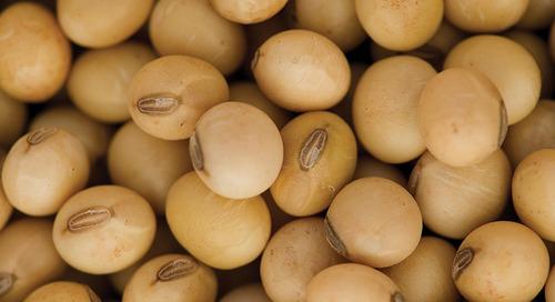 Le choix de la génétique est la première étape vers des rendements de soya élevés