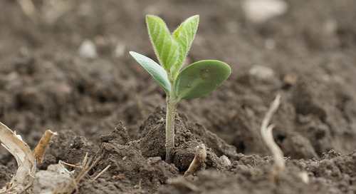 Adoptez une approche systémique pour votre production de soya