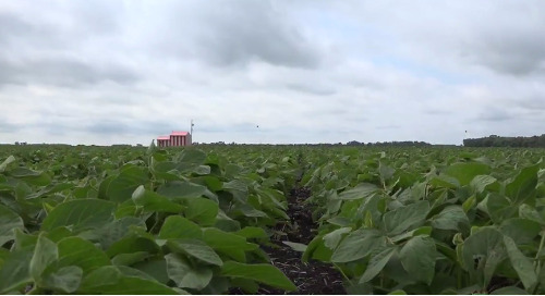 Five steps for a better soybean stand - introduction
