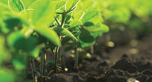 Tackle Weeds Early for Top Yields