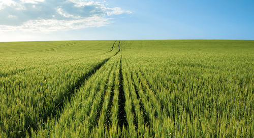A Good Fertility Plan Balances Yield and Protein