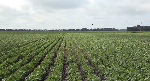 Importance of Field Selection and Proper Land Preparation