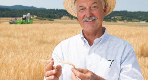 What is Luxury Barley?