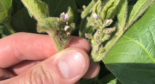 Look for In-season Opportunities to Protect and Increase Yield