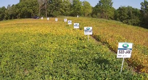 NK® Soybean Variety Trial in Drumbo, Ontario