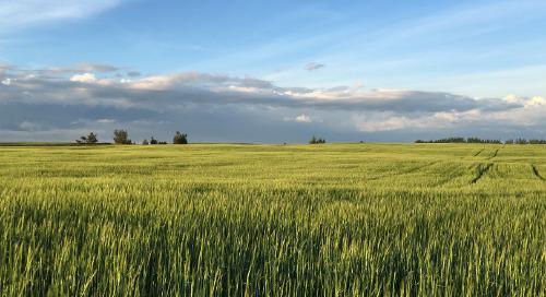 Malt Barley Yields Surprise in Challenging 2018