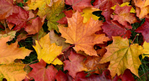 Autumn In Marketing: The Top 5 Fall Campaigns