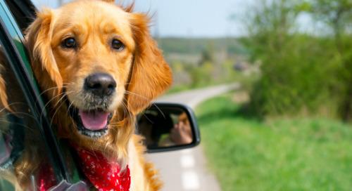 Subaru Teams with ASPCA for a Heartwarming Commercial
