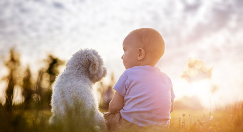 Babies & Puppies Give Ads Stopping Power