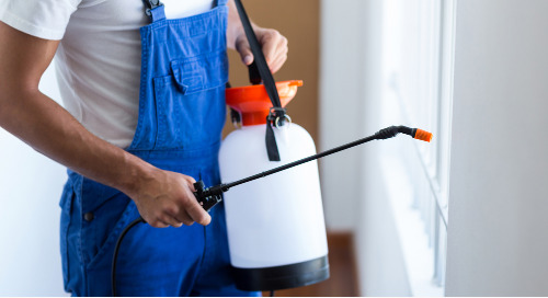Pest Control Marketing Campaigns Create Brand Awareness To Be Top Of Mind When Services Are Needed