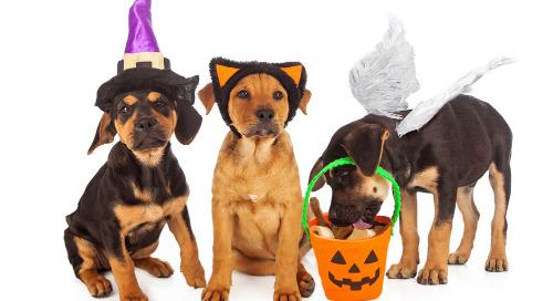 Halloween News For Digital Marketers