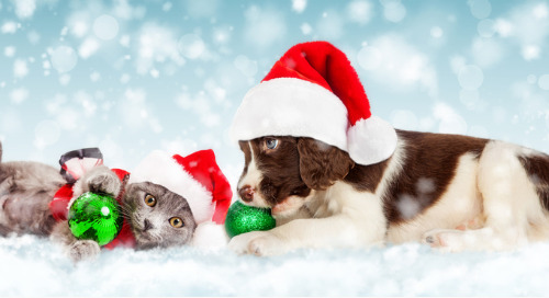 Holidays And Pets Are A Purrfect Partnership