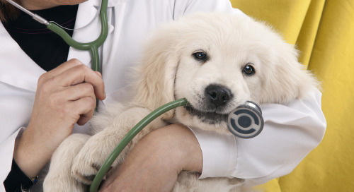 Pet Insurance Marketing Campaigns: Protecting Pets One Penny At A Time