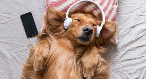 Spotify Playlists For Pets – It's The Cat's Meow