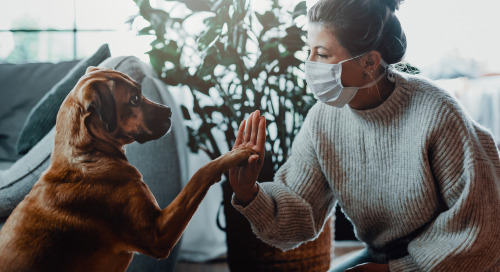 How Pet Products Brands Can Innovate To Stay Relevant