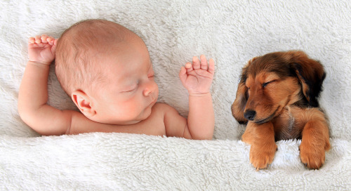 Puppies & Babies In Ads Are Powerful Eye Catchers & Scroll Stoppers