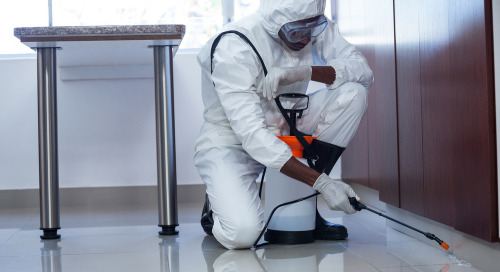 Pest Control Companies Promote Content To Acquire Customers