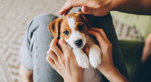 Puppy Love! Pet Brands & Retailers Engage Consumers With Digital Advertising