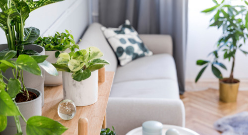 The Marketing Of Houseplant Brands Must Tap Into Today's Lifestyle Trends To Engage & Convert Millennials
