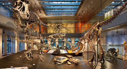 Dinosaur Hall at the Natural History Museum