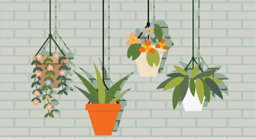Get Indoors! Plants You Can Easily Grow in Your Home