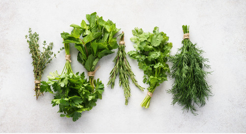 8 Herbs to Add to Your Garden Right Now