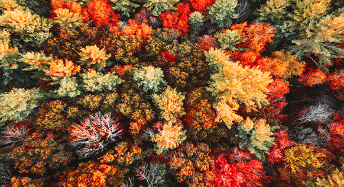 Six Trees that Put on a Magnificent Fall Show