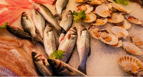 Forced Labor in Seafood Supply Chains