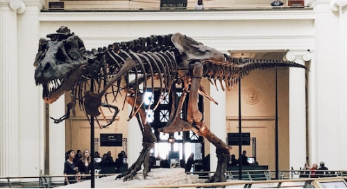 Museum Marketing: Top Trends And Strategies for Success
