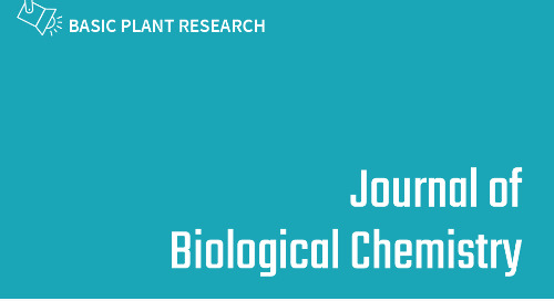 The ACT domain in chloroplast precursor–phosphorylating STY kinases binds metabolites and allosterically regulates kinase activity