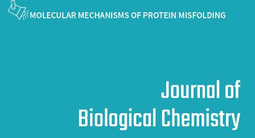 Prolyl oligopeptidase enhances alpha-syn dimerization