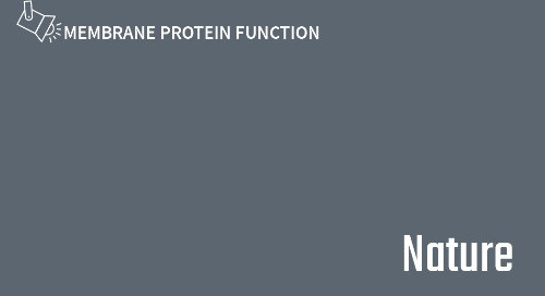Molecular basis of nitrate uptake by the plant nitrate transporter NRT1.1