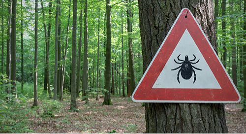 Ask a Librarian: Lyme disease