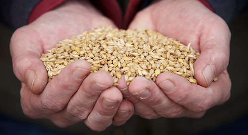 Farm Crafted Malt Flavours