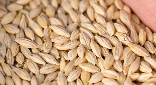 Seeding Rates Trending Upwards