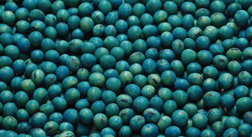Les traitements de semences aident à gérer les maladies associées à Fusarium dans le soya