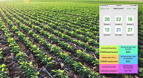 L'application Bean Cam facilite le dénombrement des peuplements