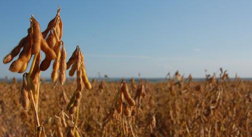 2019 Soybean Season Recap