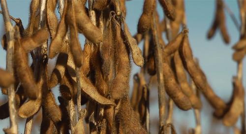 Measuring Harvest Losses