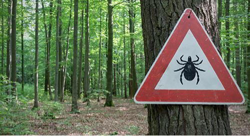 Interrogez nos bibliothécaires : la maladie de Lyme
