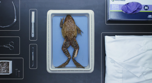 Bullfrog dissection: Everything you ever wanted to know in under six minutes.