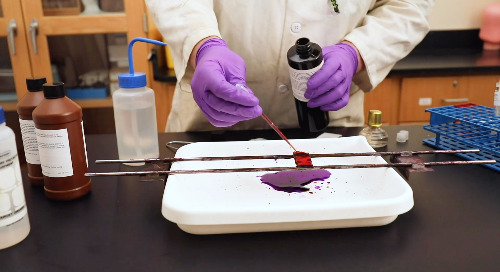 Hey bacteria, why so negative? An intro to gram staining.