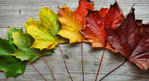 Predicting pigments: a biology activity for fall