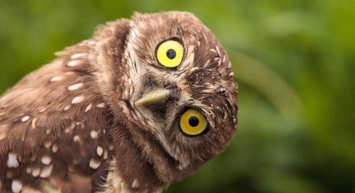 8 reasons why owl pellets are awesome for studying food chains and the environment